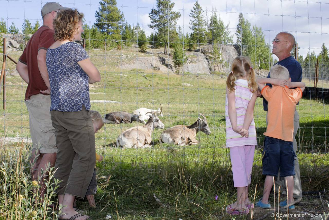 Learn about Yukon's wildlife
